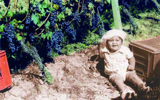 cascina tenuta del barone vendita vini langhe