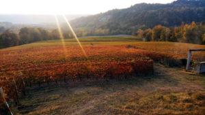 vigne tenuta del barone degustazione vini