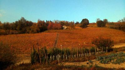 tenuta del barone degustazione vini